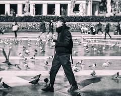 Catalonia Square (michael_hamburg69) Tags: barcelona spain spanien barcelone barcelonés barcelonesa barcellona espagne españa spagna xībānyá katalonien catalonia cataluña plaçadecatalunya people monochrome streetphotography platz tauben doves dove pigeon pigeons plazadecataluña cataloniasquare