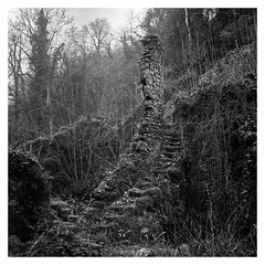 img312 (Adam Clark Photography) Tags: forest stairs bw blackandwhite ilford medium format 6x6 120mm mood atmosphere tree trees grass wood yashica mat 124g film analog analogue