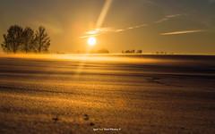 """Gold time-""""Kullatud aeg !"""" 💥☀️ (Igor """"Ixa"""" Nael) Tags: päike päikesetõus päikeseloojang sunrise sunset sun winter talv udu fog snow lumi ice landscape maastik nature imelineloodus ilovenature canon light goldtime"""