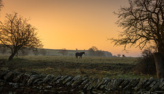dark horse (Phil-Gregory) Tags: nikon naturalphotography naturephotography national nationalpark naturalworld nature d7200 derbyshire dof dark horse orange sky sunrise dawn trees stonewall goldenhour golden scenicsnotjustlandscapes landscapes ngc england tokina tokina1120mmatx 1120mm 1120mmproatx11 1120mmproatx 1120mmf28 wideangle ultrawide superwide crop