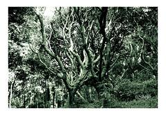 Trees & Branches 🌲🌲 (Shojib77) Tags: trees abstract branches treebranches beautifultrees fantasticnature shadow lights botanicalgarden jungle monochrome bh bnh mostakahmedshojib shojib bangladesh