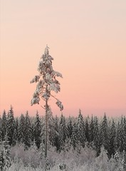 The best way to start your day (Susanna Valkeinen) Tags: winter nature morning finland