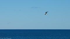 Soaring high and free. (kuntheaprum) Tags: deerisland harborwalk cityscape sony a7riii tamron boston harbor 2470 f28