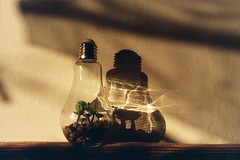 Mju II / Lomo 800 (paulrefn) Tags: lomo800 mjuii olympusmjuii analogue 35mm colorphotography ambiance