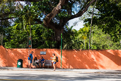 bus stop (jenny_guo) Tags: miami florida travel bus stop station people street fujinon x 18mm f2 coral wall green tree trees color colour colorful colourful outdoor road busstop