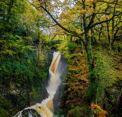 Aira Force Waterfall (Anthony White) Tags: dockray england unitedkingdom gb waterfall autumn water trees no people anthonywhitesphotography