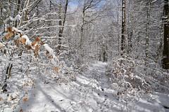 Dans la forêt de l'hiver blanc (Excalibur67) Tags: nikon d750 sigma globalvision art 24105f4dgoshsma forest foréts arbres trees nature neige snow sentier bois sousbois