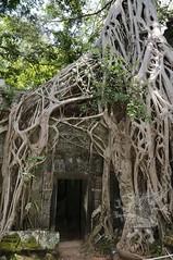 Angkor_Ta Prohm_2014_36