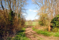 Wide open spaces on Happy Valley (zawtowers) Tags: london loop section 5 five hamseygreentocoulsdonsouth walk amble stroll walking exploring outer suburbs green spaces sunday 24th march 2019 warm dry sunny afternoon blue skies sunshine happy valley wide open space trees peeking