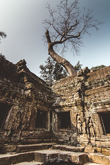 Ta Prohm temple, Siem Reap, Cambodia (longtnguyen) Tags: cambodia travel siemreap temples ancient khmer architecture trees