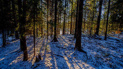 Kasaberget, East-Helsinki, Finland. (Esa Suomaa) Tags: esasuomaa helsinki finland winter sun forest trees path trail olympusomd