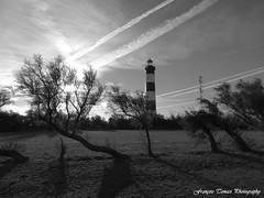 Le monochrome de Janvier !!! (François Tomasi) Tags: françoistomasi monochrome blackandwhite noiretblanc îledoléron oléron phare pharedechassiron pertuisdantioche antioche charentemaritime sudouest justedutalent france europe french atlantique mer sea borddemer patrimoine patrimoinedefrance architecture trees tree arbres arbre nature digital numérique pointdevue pointofview pov clouds cloud nuages nuage ciel sky ombres ombre yahoo google flickr sun soleil photography photographie photoshop photo traitementdimage janvier 2019 winter hiver signature vue panorama
