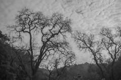 20170114_SanJose_Hike_001 (peaceblaster9) Tags: clouds trees silhouette sky winter nature hike sanjose california fujifilm x100 blackandwhite bnw bw blackwhite monochrome