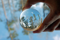 Glass Ball With Trees. (dccradio) Tags: lumberton nc northcarolina robesoncounty outdoor outdoors outside nature tree trees bokeh nikon d40 dslr saturday saturdayafternoon winter january lensball ball glassball lensballphotography tensphy glassballphotography crystalball crystalballphotography woods sky bluesky backyard goodafternoon afternoon grass ground browngrass tallgrass weeds hand