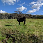 Sunol Regional Wilderness thumbnail