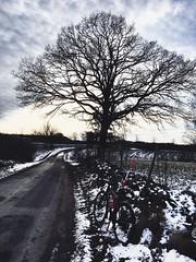 My favorite oak waiting for spring (Göran Nyholm) Tags: