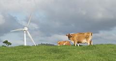 Ravenshoe_20190216_0026 (O En) Tags: wind turbines ravenshoe cows