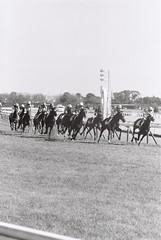 競馬 (Architecamera) Tags: monochrome horse racing blackandwhite blackwhite