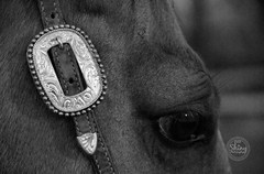 Up close with Tony the horse, in black and white.  ~ ~ ~ ~ ~  Taken on 11-20-18, at G and J Lazy P in #Arvada, #Colorado. #CanonRebelT5 #Canon #Rebel #T5 F/5.6 120mm 1/4000s ISO-3200 #horse #blackandwhite  #oooShiny #oooShinyPhotography #horsephotography (oooshinyphotography) Tags: equestrian canonrebelt5 equestrians arvada canon oooshiny animalphotography blackandwhite colorado equines bnwcaptures equestrianphotography animals blackandwhitephotography horsephotography t5 rebel bnw equinephotography horse oooshinyphotography horselover animal bnwphotography horselove horses equine