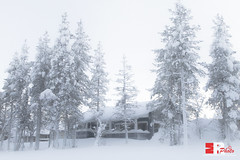 home, sweet home. (Michele Rallo - MR PhotoArt) Tags: lapland lapponia finlandia finland polo north northern world mondo viaggio viaggi travel adventure avventura snow neve nordico paese paesi regione region arctic landscape skyline natura nature trees house home michelerallomichelerallomrphotoartemmerrephotoartphotopho