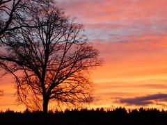 Abendhimmel mit Baum (elisabeth.mcghee) Tags: abendrot abendhimmel abendsonne sunset sonnenuntergang himmel sky wolken clouds unterbibrach bäume trees wald forest oberpfalz upper palatinate