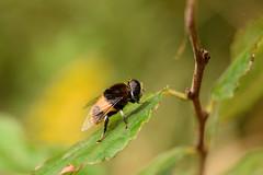 DSC_6717 (Hachimaki123) Tags: 所沢航空記念公園 tokorozawaaviationmemorialpark 日本 japan 所沢市 埼玉県 所沢 tokorozawa saitama animal insect insecto 虫 動物