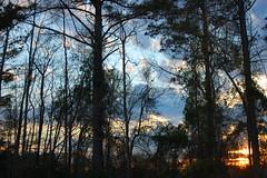 Monday Evening Sunset. (dccradio) Tags: lumberton nc northcarolina robesoncounty outdoor outdoors outside nature natural sky tree trees woods wooded forest march monday spring springtime evening mondayevening goodevening nikon d40 dslr settingsun sunset sunlight sun sunshine cloud clouds
