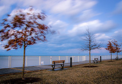 A Mighty Wind (Neil Cornwall) Tags: 2019 canada lakestclair lakewoodpark march ontario tecumseh clouds winter trees leaves oaktree wind sky evening