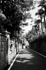 Bellagio (Max Sat) Tags: 135 38mm analog bw beautiful bellagio blackandwhite chemin como film fujiklasses fujinon ilford ilfordfp4 italia italie italy klasse klasses lac lacdecôme lagodicomo lake lakecomo maxsat maxwellsaturnin nb noiretblanc palm palmtree palmier road rue