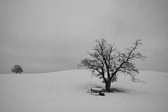 Eingeschneit (flori schilcher) Tags: schilcher baum schnee winter
