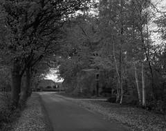 Winter road (Rosenthal Photography) Tags: winter 6x7 ff120 strase epsonv800 landschaft mittelformat städte ilfordlc2911921°c145min 20181203 schwarzweiss ilfordrapidfixer anderlingen asa3200 mamiya7 ilforddelta3200 dörfer siedlungen road december landscape path way pathway track trail mood mamiya 150mm f45 ilford delta delta3200 lc29 119 epson v800