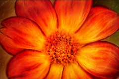 Artistic Orange Dahlia 6-0 F LR 9-30-18 J077 (sunspotimages) Tags: flower flowers dahlia dahlias orange orangeflower orangeflowers orangedahlia orangedahlias digitalmanipulation artistic fractalius emboss artwork