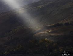Sunbeam ([CamCam]) Tags: sun sunbeam beam illuminate tree trees forest wood woods autumn colour colours colourful