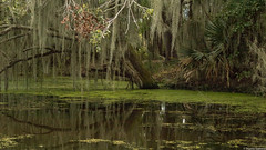 Jean Lafitte National Park, Louisiana (tomst.photography) Tags: jeanlafitte jeanlafittenationalpark nationalpark nature swamp bayou bornonthebayou south usa southernstates louisiana crocodiledundee crocs adventure beautyofnature water green river sumpf südstaaten gator tomst