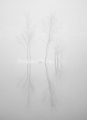 Two trees (MortenTellefsen) Tags: 2019 kanadaskogen trees reflection bw blackandwhite blackandwhiteonly monochrome norway norwegian nature