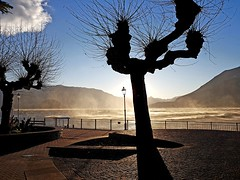 Como Lake - Varenna lake front (roberto parravicini) Tags: comolake varenna lombradia lombardy acqua water vento wind alberi trees piazza place sole sun controluce backlight