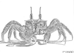 Horned Ghost Crab (JDH Artworks) Tags: stippling phoenixaz handdrawn wildlife marinelife crab fiddlercrab dots copicmultiliner copic fineart blackandwhite