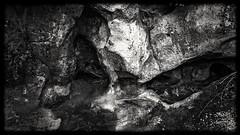 Un drôle de regard ! (geolabidouille) Tags: blackwhite noirblanc monochrome naturemorte samsung