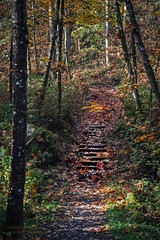 stairs through the leaves (Sherry Landon-non stop creations) Tags: fall autumn path stairs forest sherry landon non stop creations surrey bc canada