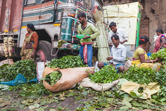 selling leaves (s.v.e.n.) Tags: india calcutta kolkata west bengal mullick ghat street market travel selling leaves green colour canon 1635mm