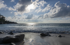 Anse Intendance / Пляж Анс Интенданс (dmilokt) Tags: природа nature пейзаж landscape море sea пляж beach пальма palm dmilokt nikon d850