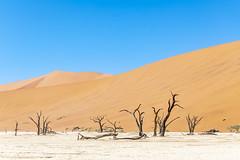 _RJS4635 (rjsnyc2) Tags: 2019 africa d850 desert dunes landscape namibia nikon outdoors photography remoteyear richardsilver richardsilverphoto safari sand sanddune travel travelphotographer animal camping nature tent trees wildlife