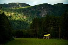 A Spot of Yellow (audun.bie) Tags: norway austagder setesdalen valle nature landscape green valley