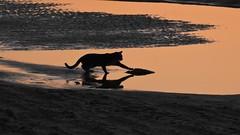 52 in 2019  #5 Curiosity (unicorn7unicorn) Tags: море кошка отражение пляж песок curiosity любопытство 3652019 day23365 23jan19 israel ישראל