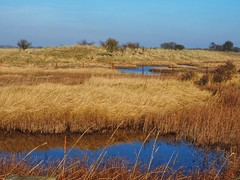 Wet land (Artybee) Tags: gibraltar point lincolnshire olympus mirrorless camera em10