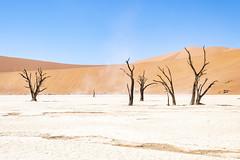 _RJS4677 (rjsnyc2) Tags: 2019 africa d850 desert dunes landscape namibia nikon outdoors photography remoteyear richardsilver richardsilverphoto safari sand sanddune travel travelphotographer animal camping nature tent trees wildlife