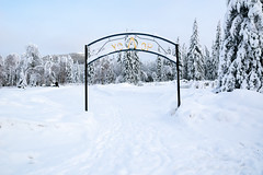 _ROS3573-Edit.jpg (Roshine Photography) Tags: winter yukonquest yukonterritory environmental dawsoncity cemetery snow yukon canada ca