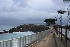 IMG_9769 (mudsharkalex) Tags: california pacificgrove pacificgroveca loverspointpark