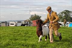 Jog (meniscuslens) Tags: man hat cap pony shetland skewbald grass arena event bucks county show buckinghamshire aylesbury weedon sky clouds