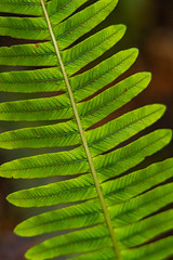 11 of 52 Weeks (Lyndon (NZ)) Tags: week112019 startingtuesdaymarch122019 52weeksthe2019edition macro ilce7m2 leaf sony green nature forest pattern repetition
